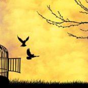 freedom, сугестопедия - Езиков Център Асториа Груп